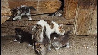 Kotki - 5 kotków, dwie matki