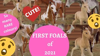 FIRST cute and rare FOALS of 2021! Can't believe the colours! PART 1 Rival Stars Horse Racing