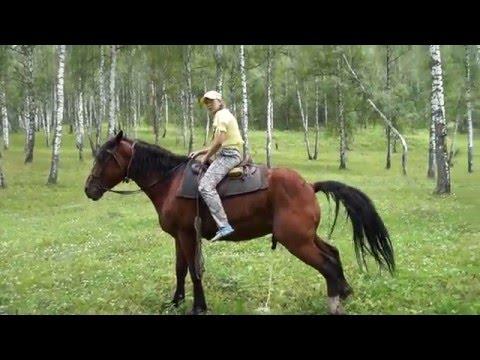 Как какают лошади