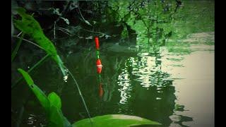 Mancing di sungai yang keruh pelampung masih ngetrik