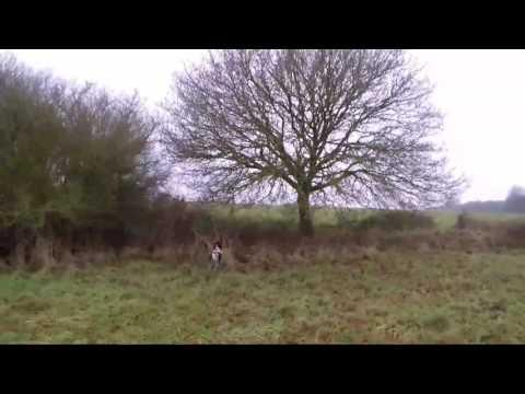 belle-action-de-chasse-à-la-bécasse-en-bretagne