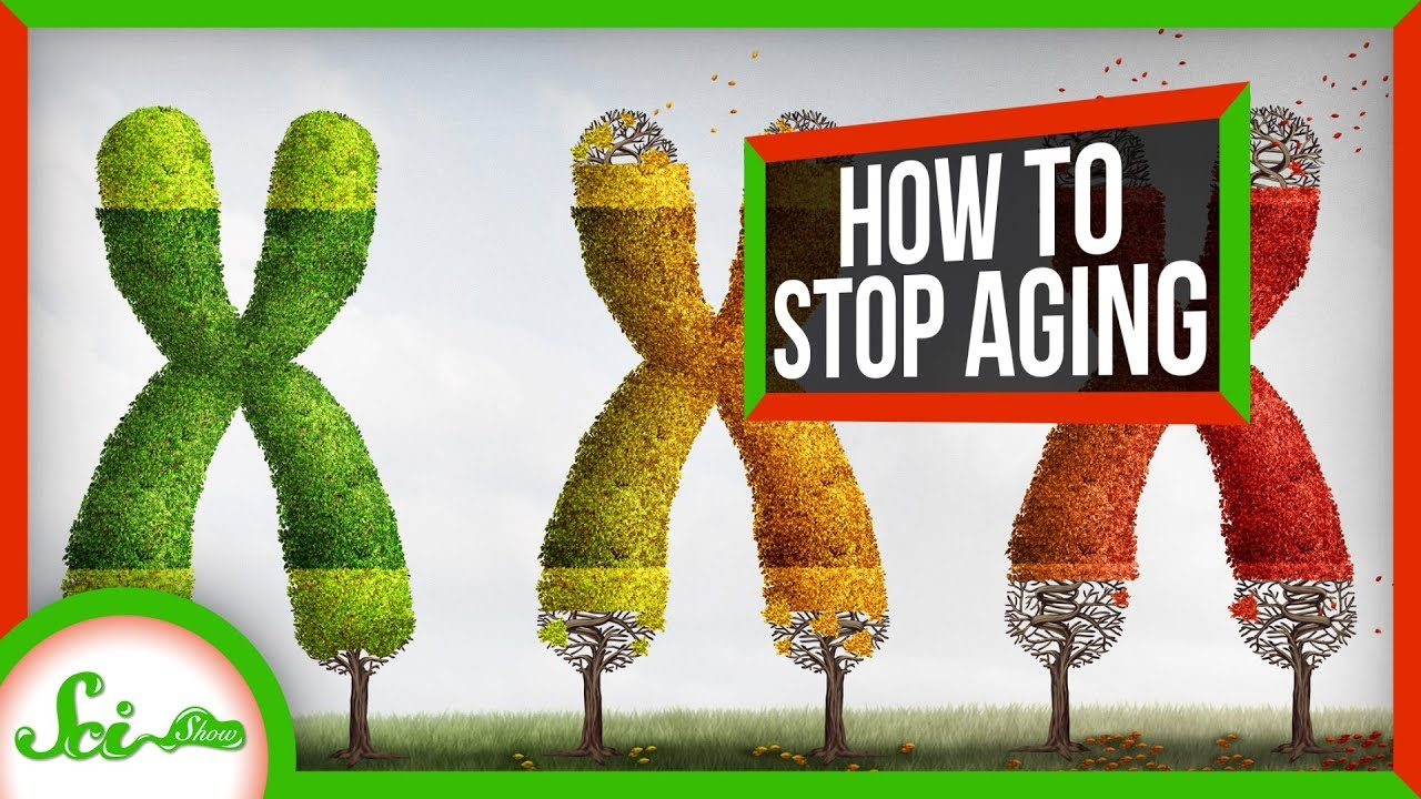 Download Why We Age - And How We Can Stop It