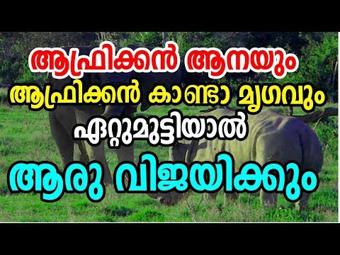 Elephant vs Rhino Fight Who will Win | African Elephant vs African Rhinoceros | ആനയും കാണ്ടാമൃഗവും