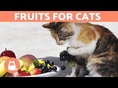 Pet Corner - The BEST FRUIT for CATS - Feeding Guide & Benefits