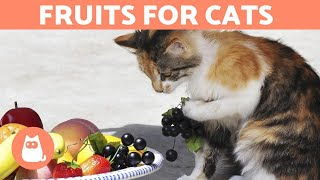 The BEST FRUIT for CATS - Feeding Guide & Benefits