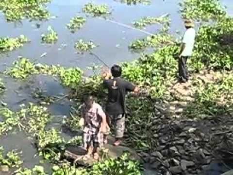 Bờm xem câu cá sông Bình Lợi