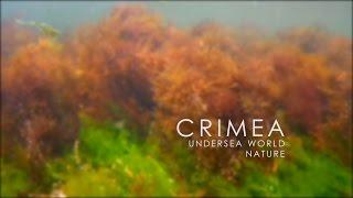 CRIMEA - Undersea World | Nature Video