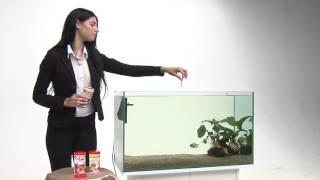 PRODAC: Как ухаживать за золотыми рыбками