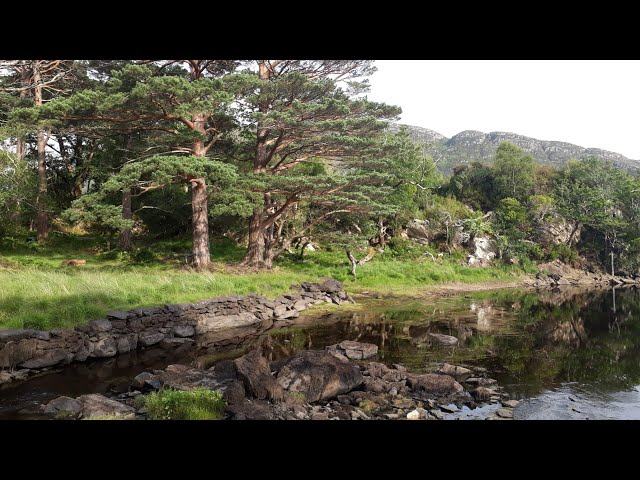 London,Cornwall, Newquay, Kerry county,  Ireland, Killarney national park, Summer trip.