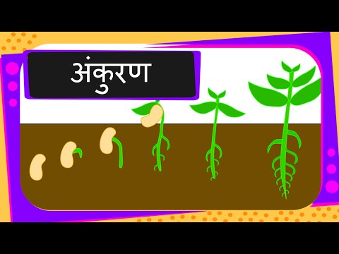 Science germination of seed hindi youtube science germination of seed hindi ccuart Images