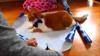 ネコをクリスマスプレゼントにラッピングするご予定のある方にとてもお...