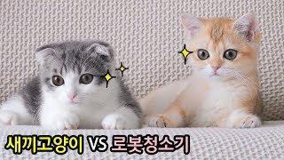 새끼고양이가 로봇청소기를 처음보면 이렇게 귀여움 (ca…
