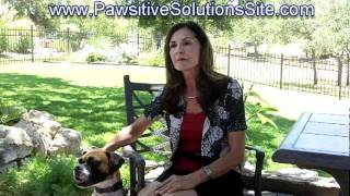 San Antonio Dog Training ~ How To Establish Rules For Your Pet