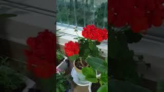베란다정원꾸미기[veranda garden]