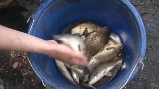 Весенняя Ловля Карася Поплавочной Удочкой  'О Рыбалке Всерьез' видео 233