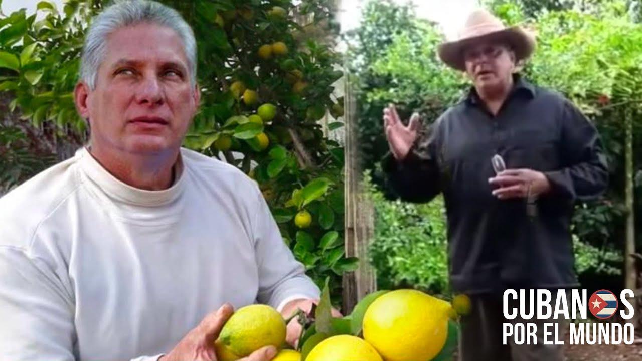 """Campesinos cubanos responde a Díaz-Canel: """"Ustedes son responsables que en Cuba no hay alimentos"""""""