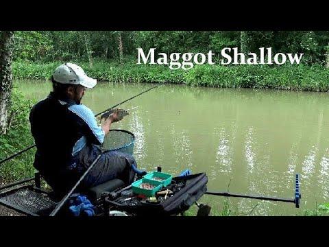 Fishing Maggot Shallow For Ide