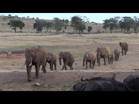 Kenya launches elephant census