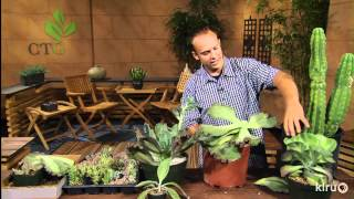Propagating succulents pt. 2|Eric Pedley|Central Texas Gardener