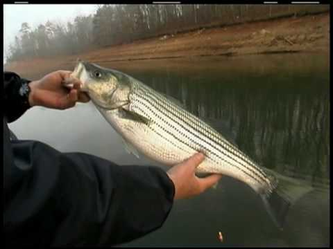 Captain Mack Farr_Stripers and Spots on Live Bait Pt. 1 of 4