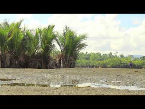 HJ Agter - Sye .Manseren Sawar Warbenawar | Lagu Daerah Papua