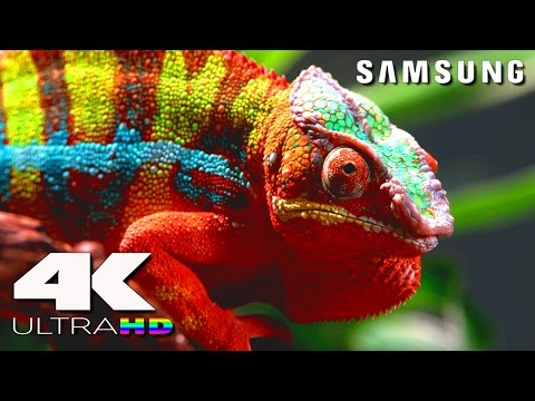 4K Ultra HD | SAMSUNG UHD Demo: Nature in 4K