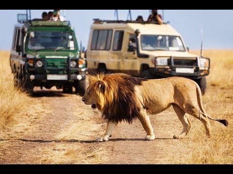 Safari Dubai سفاري دبي