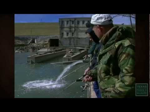 Trout Stocking: Easy-to-catch Sport Fish