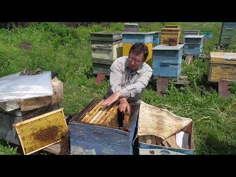 Подогрев пчел ранней весной своими руками видео