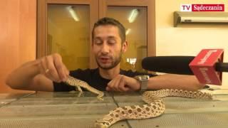 Chcesz pobawić  sie wężem ?