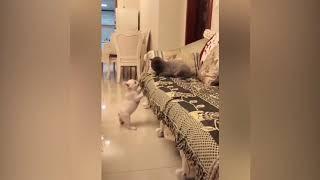 Смешные видео с котами и собаками. Смотреть ВСЕМ. Приколы с веселыми животными.