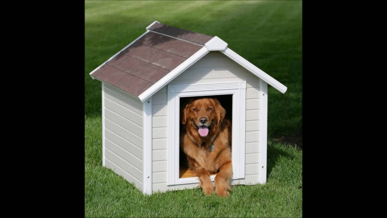 Outdoor Dog House Stairs