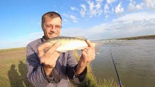 Рыбалка на оз. Шолак. Ловля окуня на отводной поводок.Рыбалка в Казахстане.