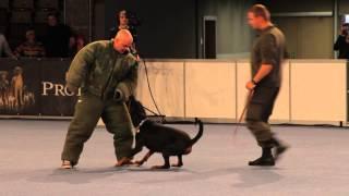 Все О домашних Животных: Рабочие Породы Собак
