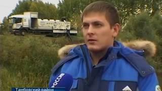 В Тамбовской области восстанавливают популяцию сазана
