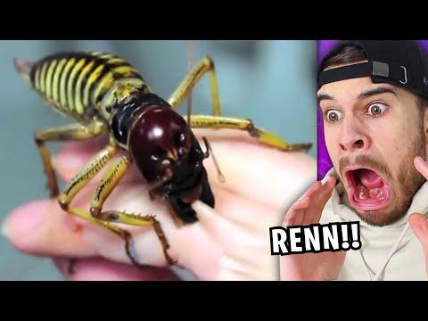 Wenn du dieses Tier siehst, LAUF WEG und hol HILFE!!