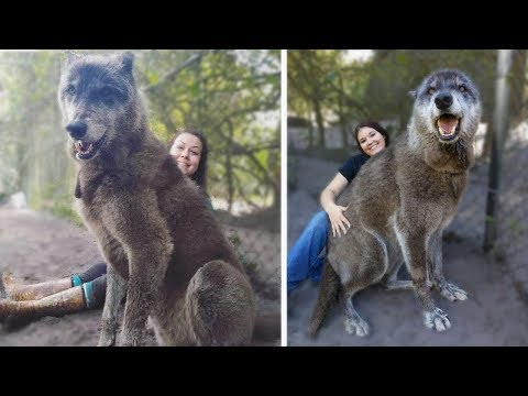 15 Wolves You Wont BELIEVE Actually Exist!