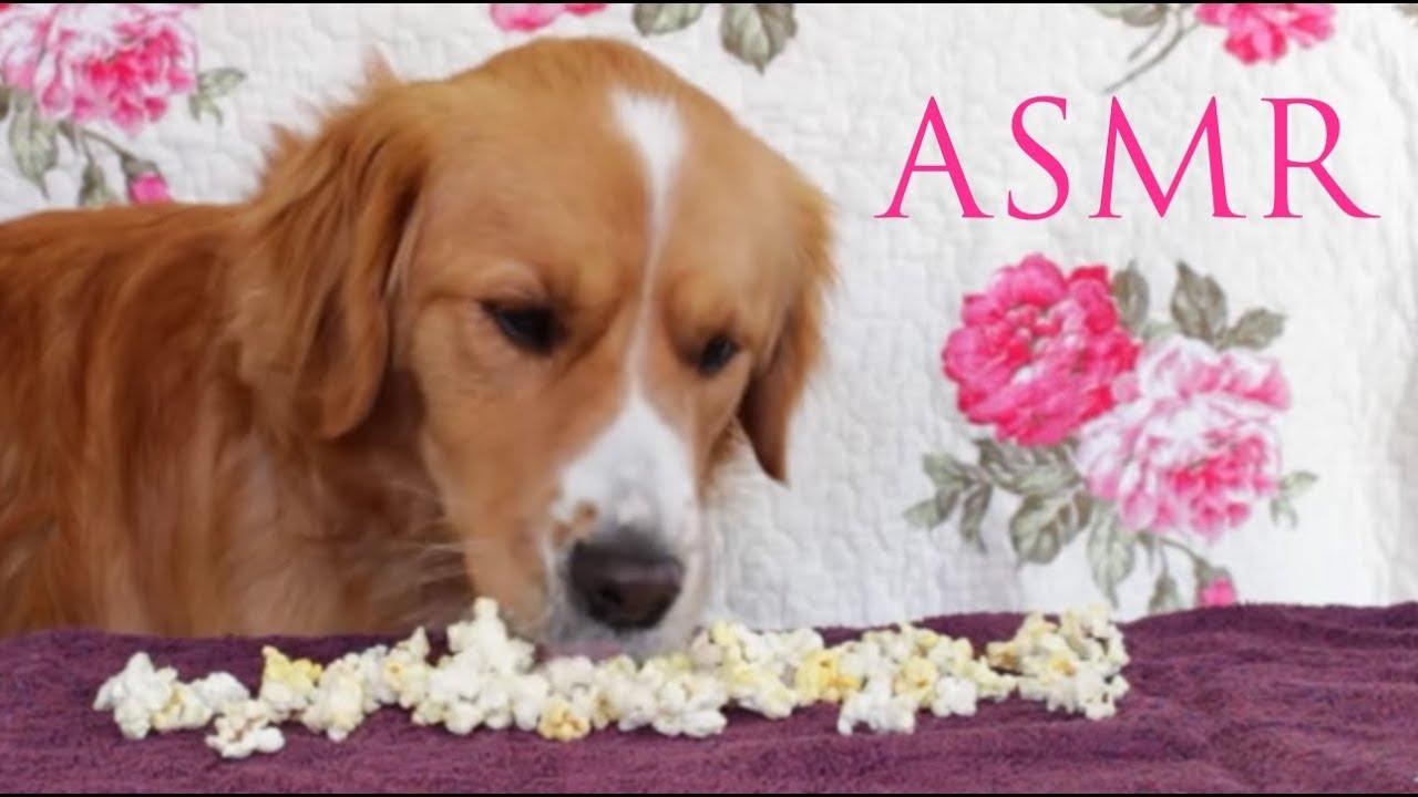 My dog eating popcorn (ASMR) - YouTube