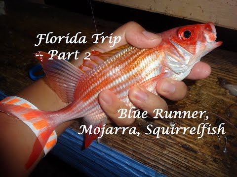 Florida Fishing Trip -- Part 2: Mojarra, Blue Runner, Squirrelfish (Fort Lauderdale, FL)