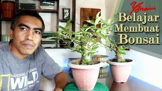 Cara Membuat Bonsai Loa (Ficus Racemosa)