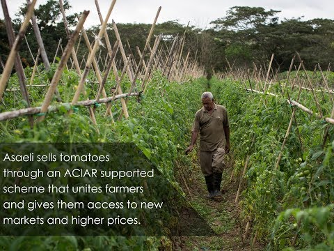 Asaeli's story-Tomato- Integrating protected cropping systems in Fiji - ACIAR