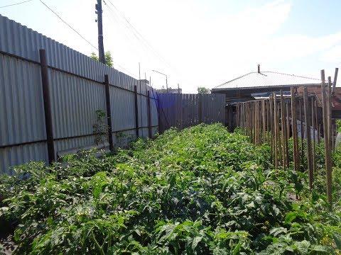 Вопрос: Стоит ли сажать много сортов томатов или ограничится несколькими?