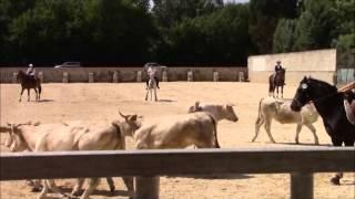 Tenorio de Verlin - Tri du bétail - Beaucaire 2014