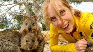 Самые милые животные и ответы про поездку
