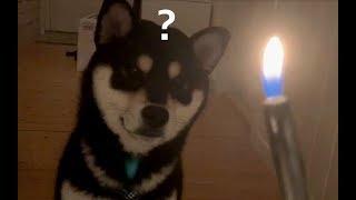 how-doggo-react-to-fire
