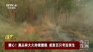 [今日亚洲]速览 揪心!澳丛林大火持续燃烧 或致百只考拉丧生| CCTV中文国际