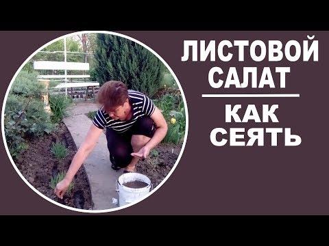 Как сеять листовой салат