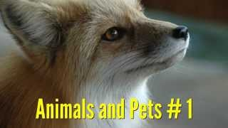 Animals & Pets # 1 - Vocabulary Building