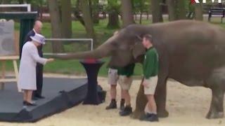 Королева Елизавета II встретилась со своей тёзкой слонихой