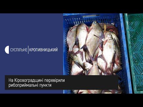Суспільне Кропивницький: На Кіровоградщині перевірили рибоприймальні пункти